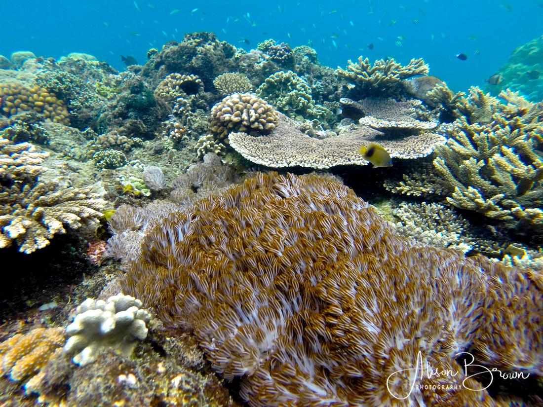 Coral Reefs of Nusa Lembongan